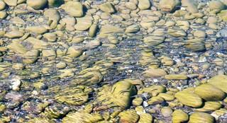 DSC04291 河口.jpg